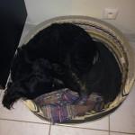 Mon chien traumatisé par mon départ